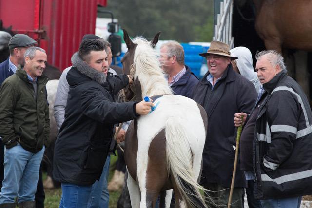 Puck Horse Fair, Ireland