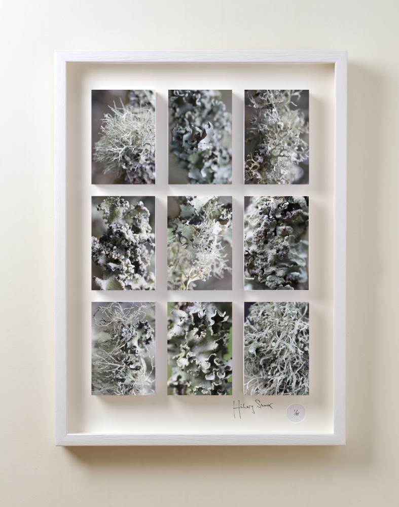 Lichen frame